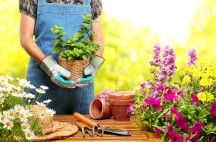 Gardening Books for Fun and Profit