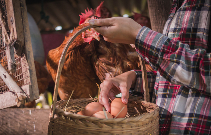 Eggsellent Reads to Start Your own Farm