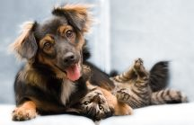 Love your Pet with these 6 Books